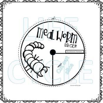"Mealworm ""Life Cycle"" (Peekaboo Spinner Wheel)"