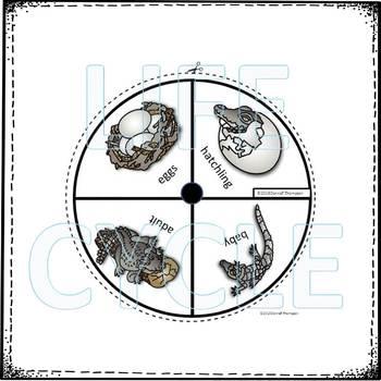 "Crocodile ""Life Cycle"" (Peekaboo Spinner Wheel)"