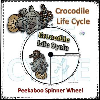 Crocodile (Life Cycle Spinner)