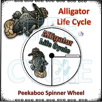 "Alligator ""Life Cycle"" (Peekaboo Spinner Wheel)"