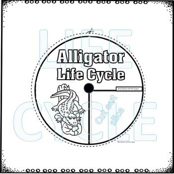 Alligator (Life Cycle Spinner)