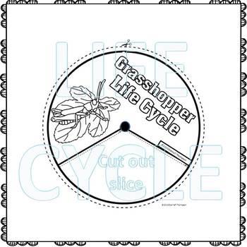 "Grasshopper ""Life Cycle"" (Peekaboo Spinner Wheel)"