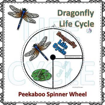 Dragonfly Life Cycle (Peekaboo Spinner Wheel)