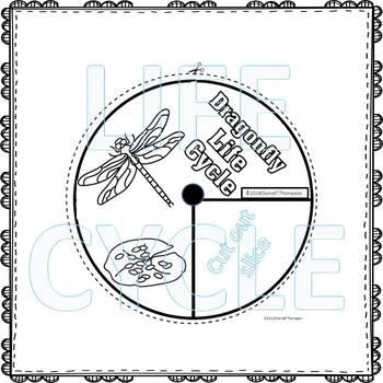 "Dragonfly ""Life Cycle"" (Peekaboo Spinner Wheel)"