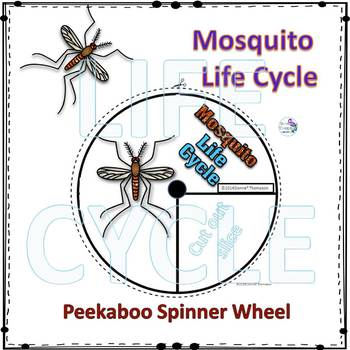 Mosquito Life Cycle (Peekaboo Spinner Wheel)