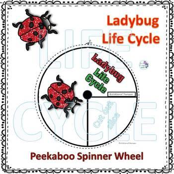 Ladybug Life Cycle (Peekaboo Spinner Wheel)