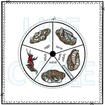 Ant (Life Cycle Spinner)