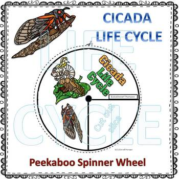 Cicada Life Cycle (Peekaboo Spinner Wheel)