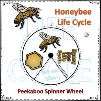 "Honeybee ""Life Cycle"" (Peekaboo Spinner Wheel)"