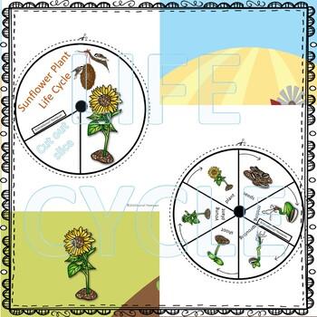 "Sunflower ""Life Cycle"" (Peekaboo Spinner Wheel)"