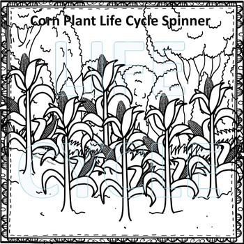 Corn Life Cycle (Peekaboo Spinner Wheel)