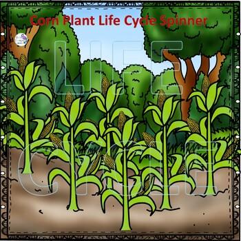 "Corn ""Life Cycle"" (Peekaboo Spinner Wheel)"