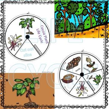 "Cocoa Plant ""Life Cycle"" (Peekaboo Spinner Wheel)"