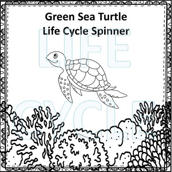 "Sea Turtle ""Life Cycle"" (Peekaboo Spinner Wheel)"