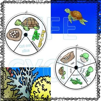 "Sea Turtle ""Life Cycle"" (Peekaboo Spinner Wheel)"