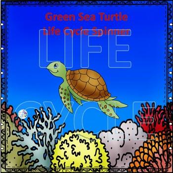 Sea Turtle Life Cycle (Peekaboo Spinner Wheel)