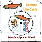 Salmon (Life Cycle Spinner)