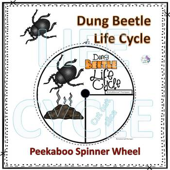Dung Beetle (Life Cycle Spinner)