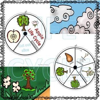 "Apple ""Life Cycle"" (Peekaboo Spinner Wheel)"