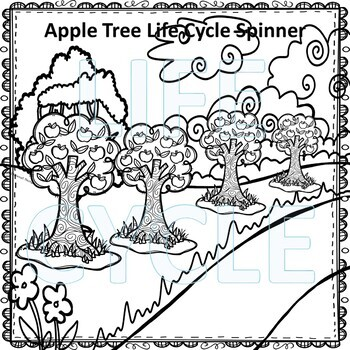Apple Tree (Life Cycle Spinner)