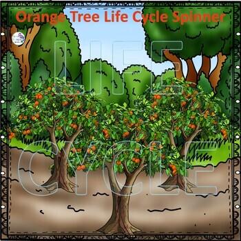 "Orange ""Life Cycle"" (Peekaboo Spinner Wheel)"