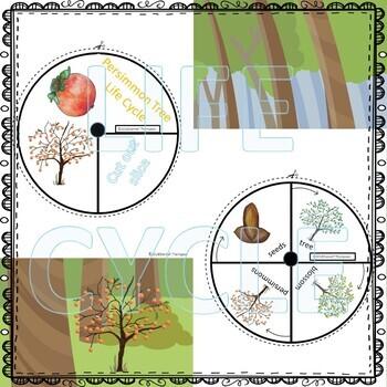 "Persimmon ""Life Cycle"" (Peekaboo Spinner Wheel)"