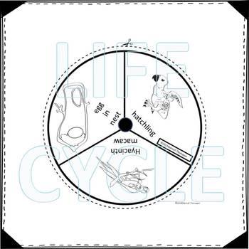 "Macaw ""Life Cycle"" (Peekaboo Spinner Wheel)"