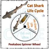 Shark (Life Cycle Spinner)