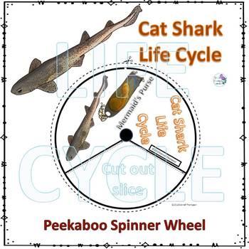 Cat Shark Life Cycle (Peekaboo Spinner Wheel)