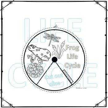 "Frog ""Life Cycle"" (Peekaboo Spinner Wheel)"