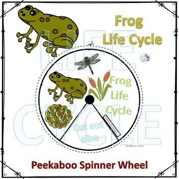 Frog Life Cycle (Peekaboo Spinner Wheel)