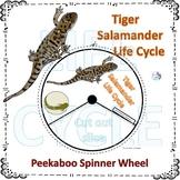 Tiger Salamander (Life Cycle Spinner)