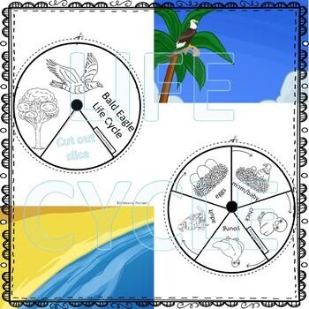 Bald Eagle Life Cycle (Peekaboo Spinner Wheel)