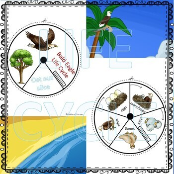 "Bald Eagle ""Life Cycle"" (Peekaboo Spinner Wheel)"