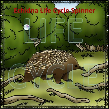 "Echidna ""Life Cycle"" (Peekaboo Spinner Wheel)"