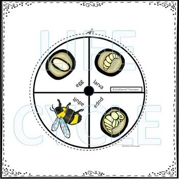 "Bumblebee ""Life Cycle"" (Peekaboo Spinner Wheel)"