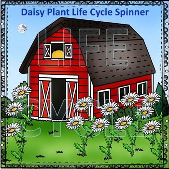 "Daisy ""Life Cycle"" (Peekaboo Spinner Wheel)"