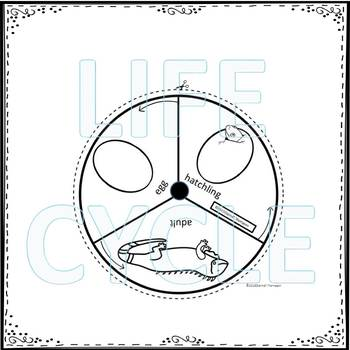 "Iguana ""Life Cycle"" (Peekaboo Spinner Wheel)"