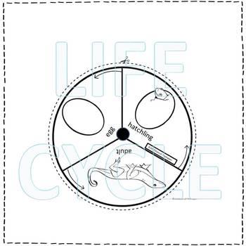 """Lizard """"Life Cycle"""" (Peekaboo Spinner Wheel)"""