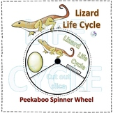 Lizard (Life Cycle Spinner)