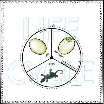 Gecko (Life Cycle Spinner)