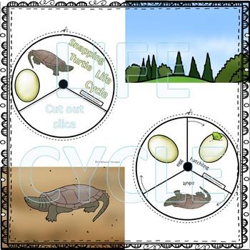 "Turtle ""Life Cycle"" (Peekaboo Spinner Wheel)"