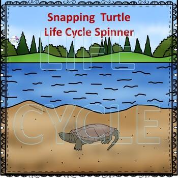 Turtle Life Cycle (Peekaboo Spinner Wheel)