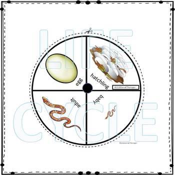 "Corn Snake ""Life Cycle"" (Peekaboo Spinner Wheel)"