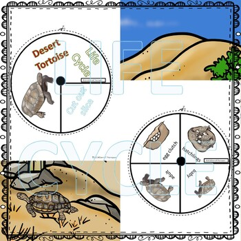 "Tortoise ""Life Cycle"" (Peekaboo Spinner Wheel)"