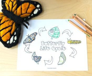 Life Cycle Activities Bundle for Preschool, Kindergarten, 1st, or Homeschool