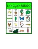 Life Cycle BINGO