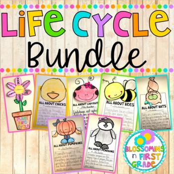 Life Cycle {BUNDLE}