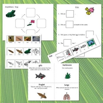 Life Cycle BUNDLE with complete lesson plans