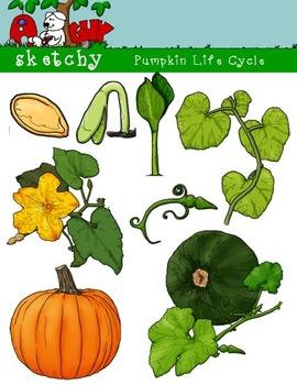 Life Cycle Bundle Set - Pumpkin / Butterfly / Frog 300dpi Color BW Black Lined